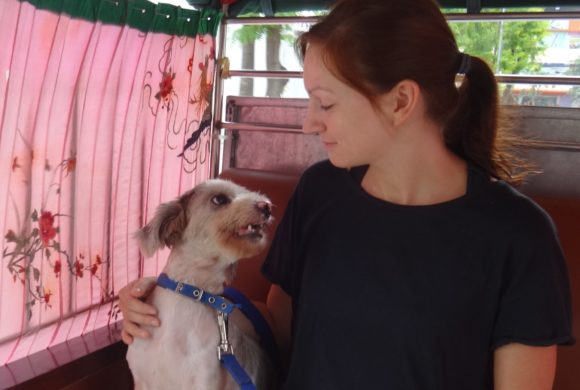 Animal Rescue Cambodia Animal Welfare in Cambodia